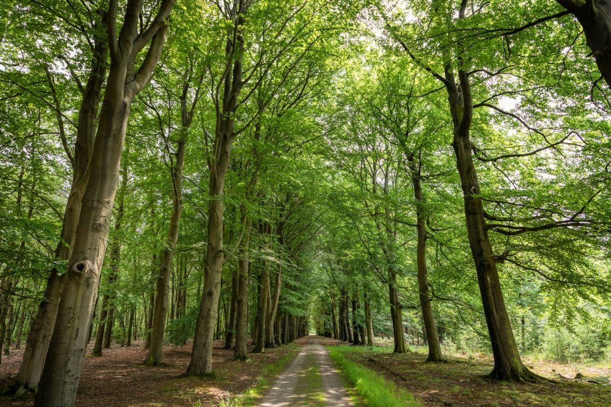 16242-Veenhuizen-bos,-boslaan@Alieke-Datema-(Asgraphy)